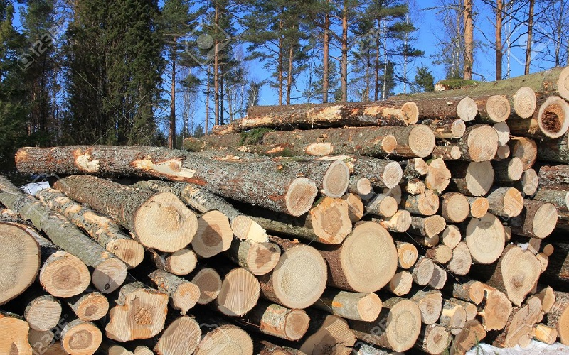 pines_logs